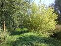 Podzim nastupuje, listí začíná již měnit barvu, při Slunci je to pěkně znát.