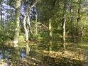 Na podzim plave listí po téměř nehybné hladině a pravděpodobně způsobí mírné zvýšení hladiny o nové bahno.
