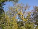 Pohled do korun stromů živých i neživých.
