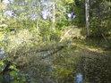 Každá nehybná voda se časem zanáší jak listím, tak padlými stromy.