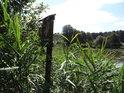 Úřední cedule v rákosí na břehu rybníka Machlov.