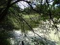 Husté pobřežní porosty na břehu prostředního částrovického rybníka.