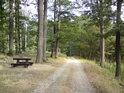 Výborné místo k lesní svačině.