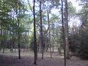 Tak nějak jako ve smíšeném lese.