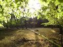 Slunce proniká přes bukové listí.
