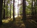 Větší škvíra mezi stromy pouští sluneční světlo na Černou stráň.