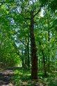Krásná procházka listnatým lesem od vody. Autor: Zdeněk Faltýn.