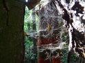 Sluncem zalité pavučiny na vnější hranici chráněného území.