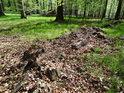 Pomalý rozklad zbytků padlého stromu.