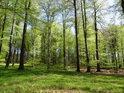 Bukový les za sytých jarních barev.