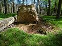 Pohlédněme pod zvednuté kořeny bukového vývratu.