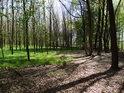 Rozhraní habrového a bukového lesa.