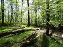 Jarem prosluněný bukový les.