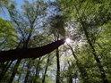 Slunce proniká přes mladé bukové listí a naráží na šikmo se držící pahýl.