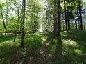 Cesta přes Černý les, toho času prosluněná.