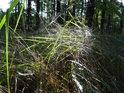 Romantické zákoutí s pavučinou v chráněném území Černý orel.