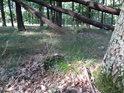 Ojedinělý polom, duby takto málokdy popadají.