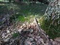 Sluneční flek u paty stromu v Černém orlu.