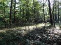 Les je zde spíše suchý, ale podrosty se mohou zdát býti lužními.
