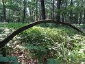 Mladý dub, ohnutý jako luk tvoří jakýsi lesní mostík.