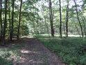 Lesní cesta po východní hranici chráněného území Černý orel.