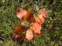 Podzimní barvy až oslní.