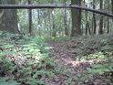 Malý přirozený dřevěný mostík.