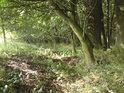 Na kraji lesa se všechno rostlinstvo kloní za světlem.
