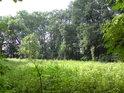 Malá divoká louka zasahuje do lesa.