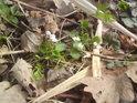 Jarní život se nezadržitelně probouzí a táhne loňským listím.