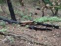 Podivně ohořelé větve, snad to mohl být kulový blesk...