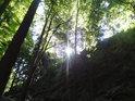 Slunce nad Čtyřmi palicemi prosvítá přes bukové listy.