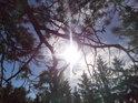 Pravoúhle mířící sluneční paprsky pod borovou větví na Čtyřpaličaté skále.