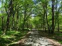 Cesta přes chráněné území Dařenec.