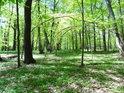 Hodně ohnuté kmeny mladých buků v chráněném území Dařenec a informační cedule u cesty v pozadí.