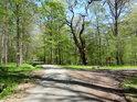 Lesní křižovatka u Matyldina dubu v Dařenci.