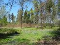 Malá bažina v severovýchodní části chráněného území Dařenec.