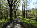 Pohled po asfaltové lesní cestě do nitra chráněného území Dařenec.
