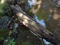 Tůňka na břehu Dědiny u brodu.