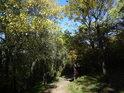 Pěšina ve stínu stromů Pod Martinkou.