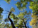 Akáty se pozvolna zbarvují do souladu s nastupujícím podzimem.