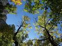 Modrozelené podzimní kouzlo mezi akáty Pod Martinkou.