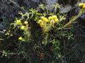 Písečná květena Pálavy.