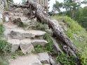 Borový kořen se plazí podle kamenných schodů.