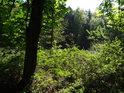 Zarostlý břeh rybníka Horní Svrčov.