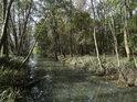 Napřímený lužní tok v Dolním luhu.
