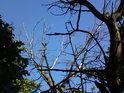 Uschlé stromy dodají výhledu do nebes na zajímavosti.