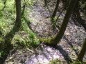 Pobřežní stromy vypadají jinak u malých potůčků a jinak u větších řek.