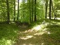 Hluboký úvoz vede Doubravou, tudy lze dojít z Moravičany do Úsova.