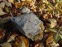 Ulomený kus skály leží na čerstvě napadeném listí.